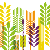 Logo of Frontiers in Agronomy, a Frontiers Open Access Scientific Academic Journal